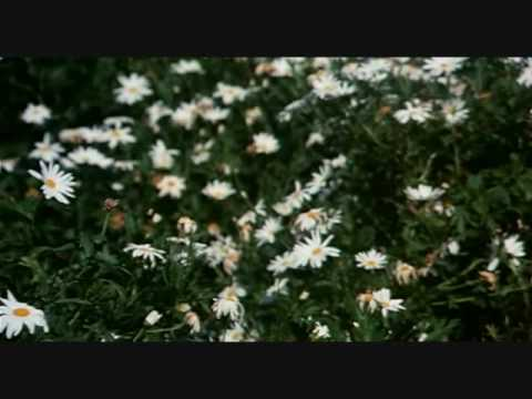 Harold and Maude – The Flower Scene