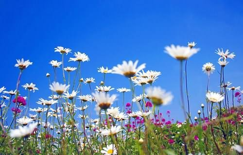 Tiptoe through the daisies... by law_keven