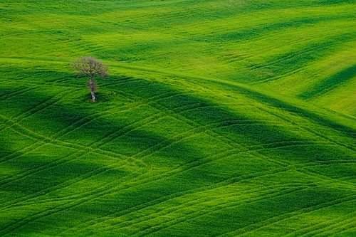 green field tree1 The Grass is Greener