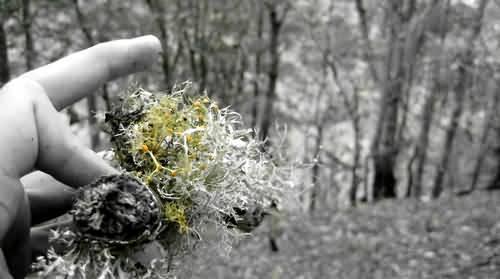 Oaxaca Moss by Sergio Beltran Garcia