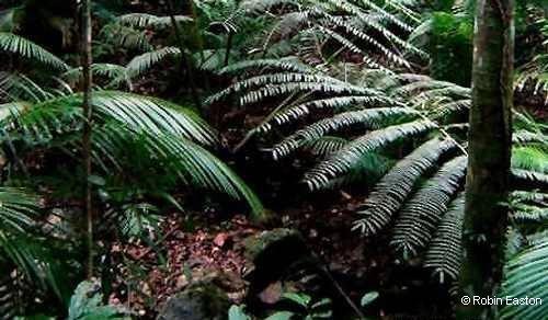 Rainforest by Robin Easton