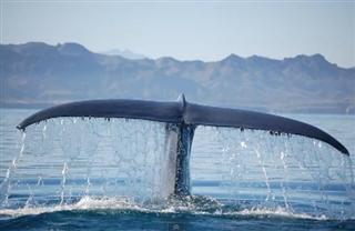 A Whale's Dance of Gratitude…